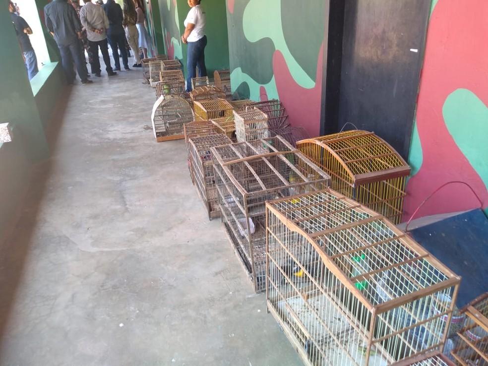 Batalhão de Polícia Militar Ambiental do Piauí apreendeu mais de 150 animais — Foto: Divulgação/Batalhão de Polícia Militar Ambiental do Piauí