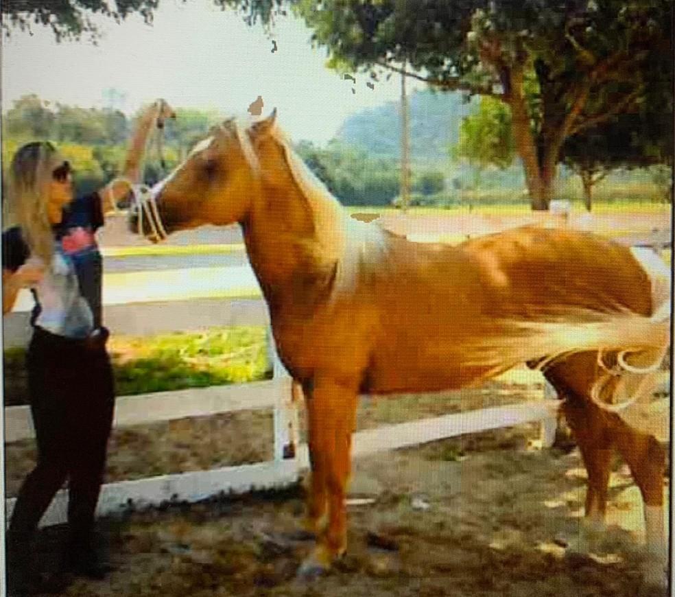 Júlia Lotufo com cavalo de Adriano da Nóbrega — Foto: Reprodução