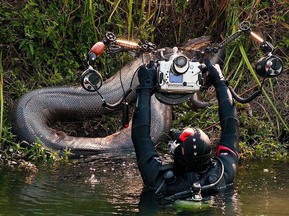 Sucuri foi fotografada até sair do rio Formoso, em Bonito — Foto: Daniel De Granville / Photo in Natura