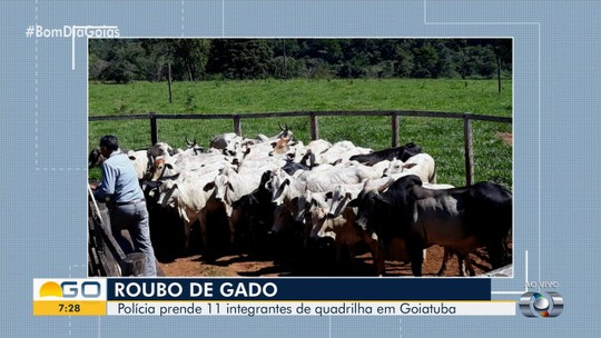Presos suspeitos de roubo de gado em Goiatuba