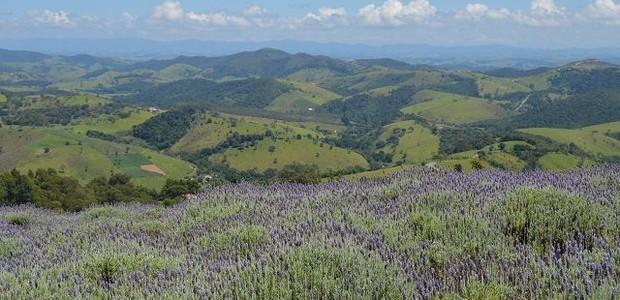 Lavandario de Cunha (Foto: Wikimedia Commons/ Reprodução)