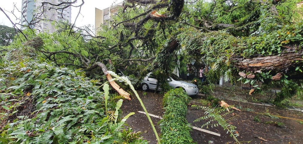 Árvore caiu sobre carros em Maringá — Foto: William Souza/RPC