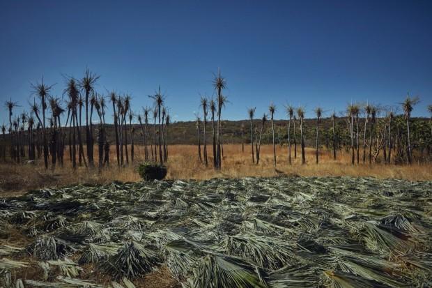 A incrível história dos artesãos que reinventam a palia em Várzea Queimada (Foto: Loiro Cunha)