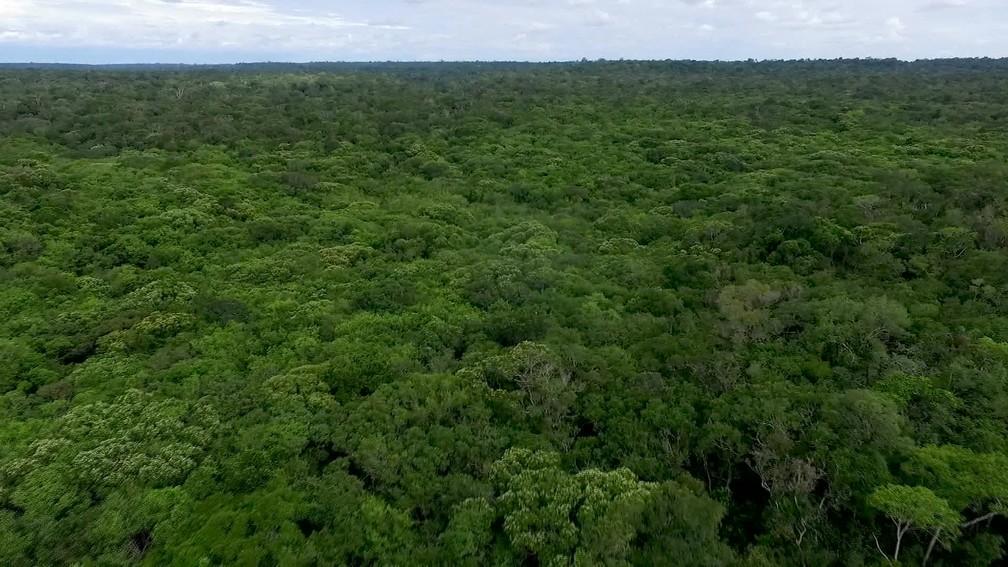 Floresta Amazônica — Foto: Rede Globo