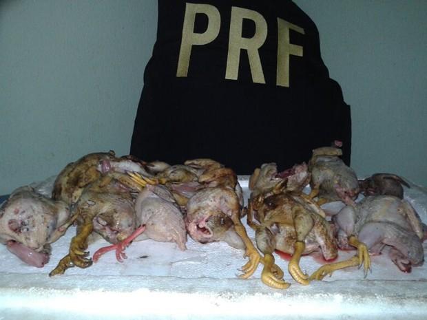 Caçadores presos estavam 12 aves silvestres abatidas, diz PRF (Fot Divulgação/PRF)