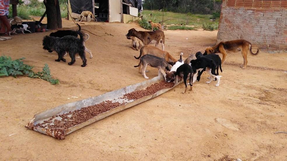 Edimárcio cuida atualmente de 28 cães (Foto: Rafaela Gomes/TV Paraíba)