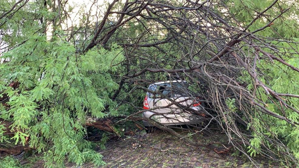 Árvore caiu e atingiu carros estacionados no Acupe de Brotas — Foto: Victor Silveira/TV Bahia