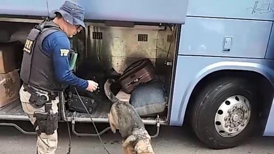 Mulher é presa com 20 kg de maconha em ônibus que seguia de SP ao ES