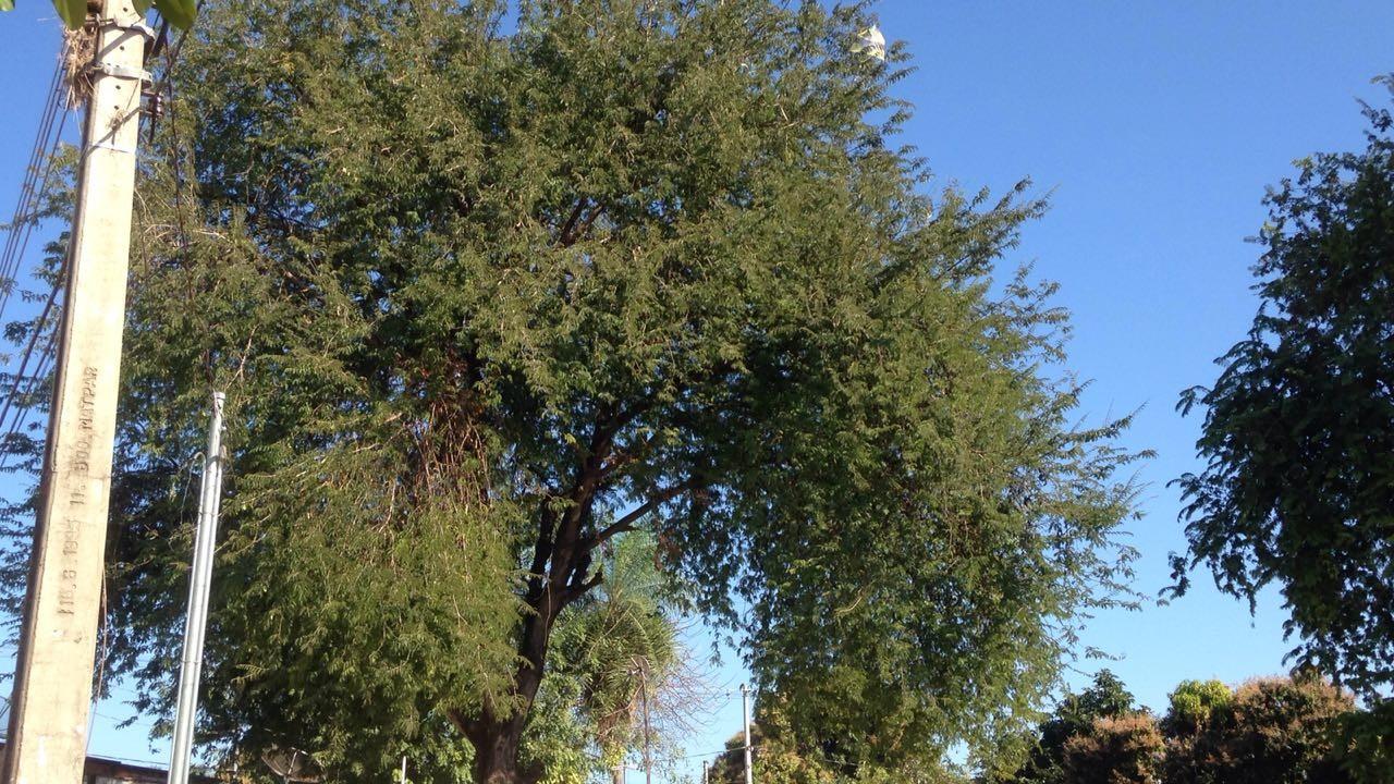 Homem morre ao cair de árvore quando tentava pegar pipa em MS