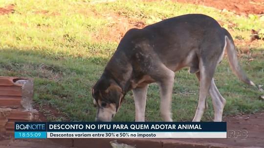 Prefeitura de Quinta do Sol dá desconto de 30% a 50% no IPTU para quem adotar cachorro de rua