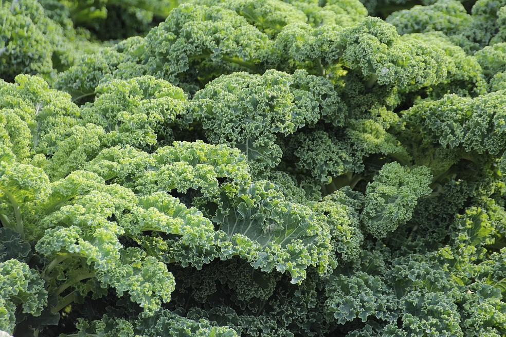 Alface, rúcula, repolho e outras hortaliças precisam de cuidados simples de irrigação  — Foto: Ouro Safra/Divulgação