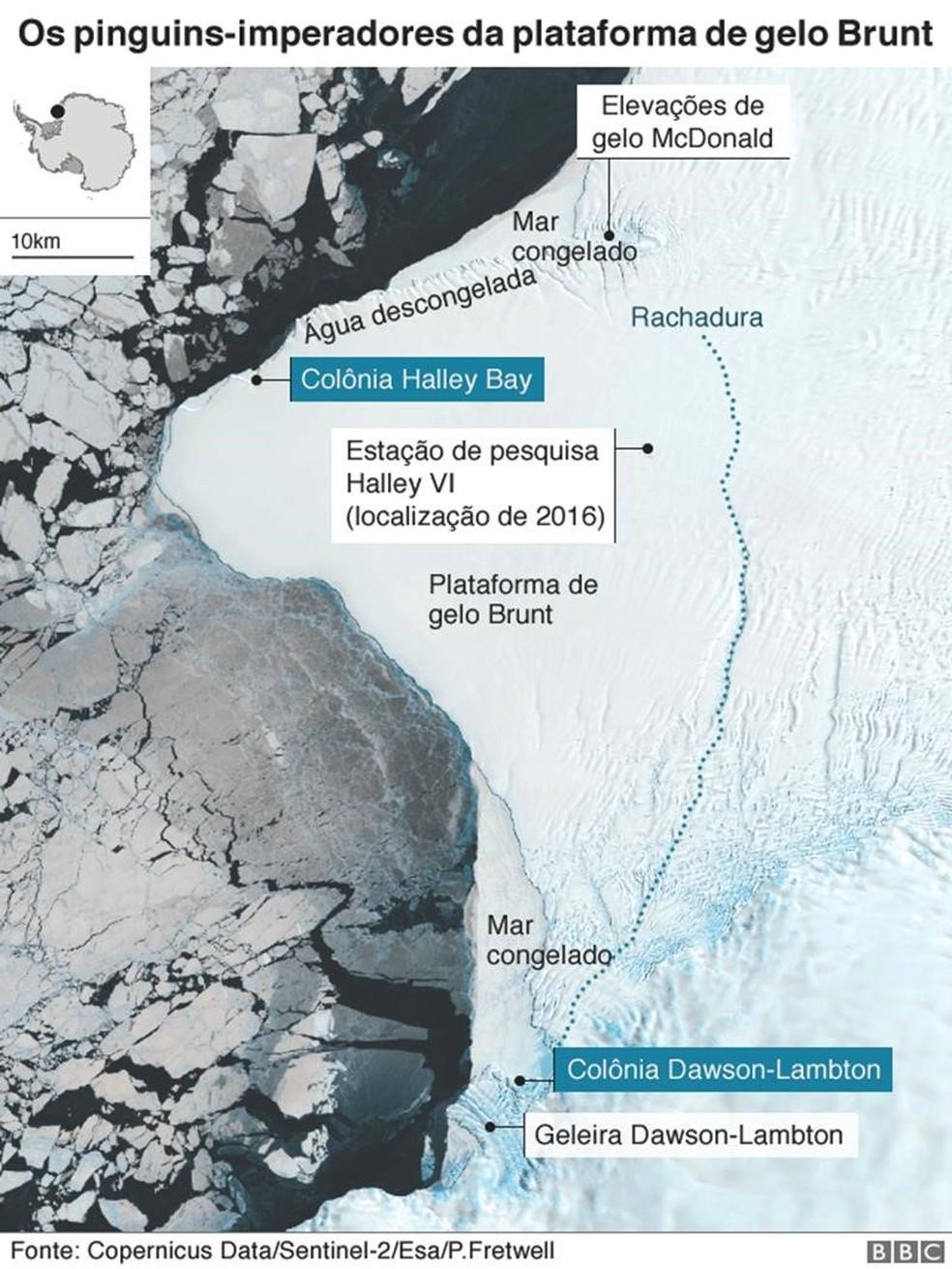 Infográfico mostra área onde colônia de pinguins ficavam — Foto: BBC