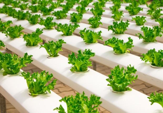 Modelo de fazenda vertical. Não são muitas as variedades de alimentos que podem ser plantadas dessa forma (Foto: pexels)
