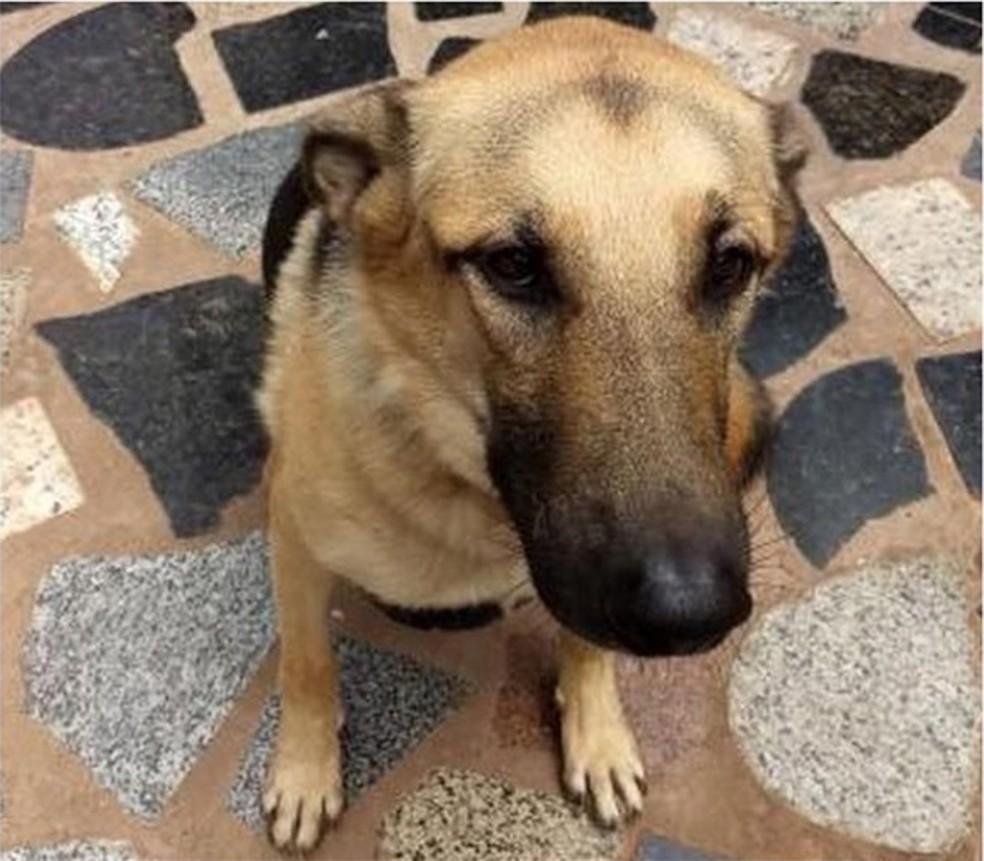 Cachorro 'Peppe' sobreviveu ao atropelamento (Foto: Luiza Mell)