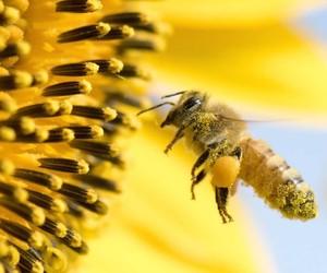 Agrotóxico causou morte de 77% das colmeias de abelhas no RS em 2021