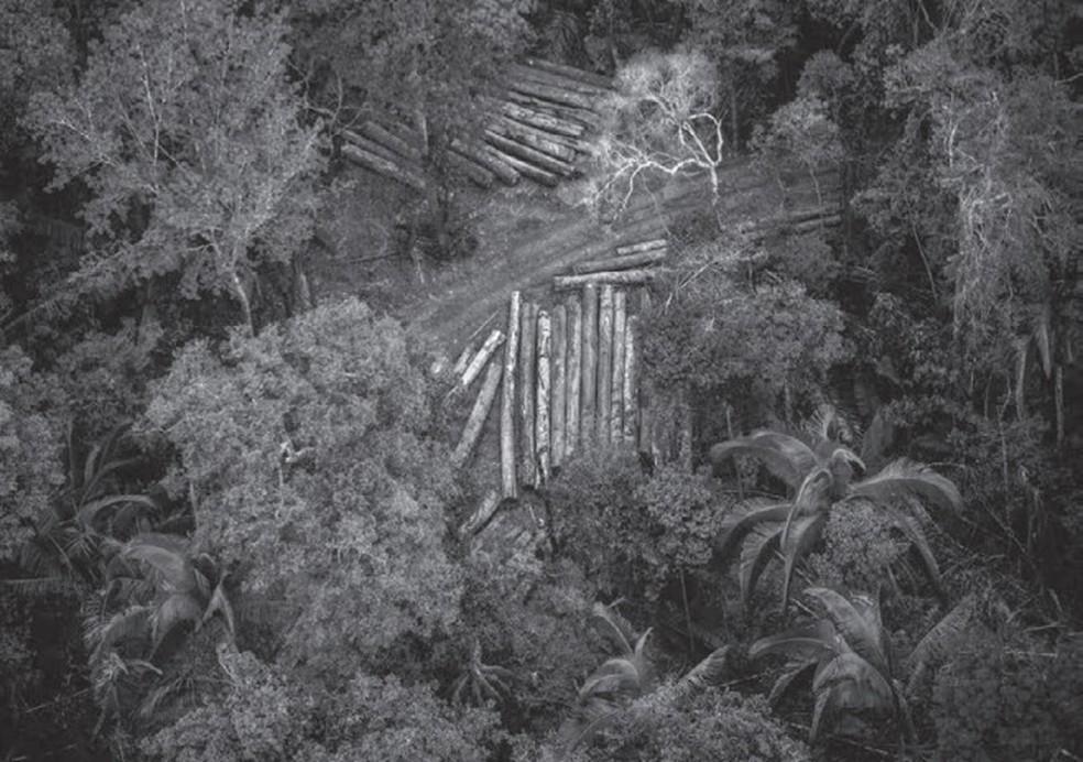 Áreas indígenas são alvos prioritários dos setores que visam a exploração madeireira, hídrica e o plantio de soja — Foto: Christian Braga/Cimi/Greenpeace