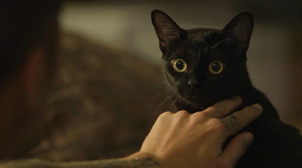 León tem no pelo a mesma marca de pata que Gabriel tem nas costas. O jovem encosta no felino e tem visão  — Foto: TV Globo