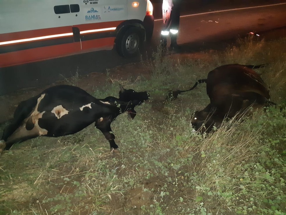 Dois bovinos também morreram após serem atropelados pelos veículos que bateram na BR-407 — Foto: PRF/ Divulgação