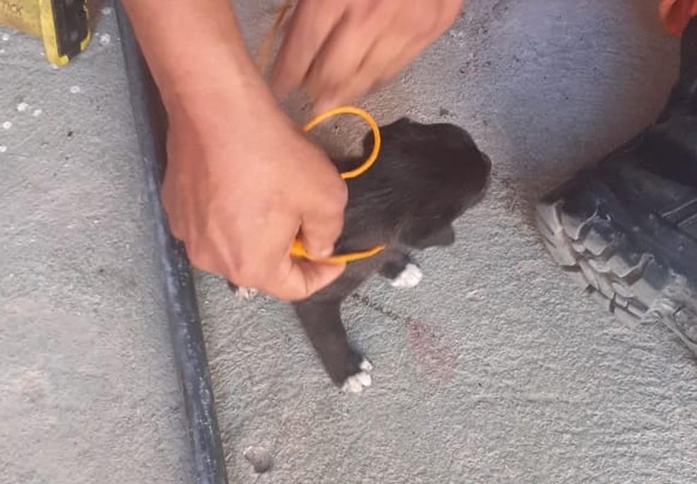 Logo após o resgate dos filhotes de cachorro, os agentes taparam o buraco, para evitar outros acidentes. — Foto: Divulgação