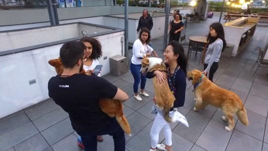 Globo Repórter investiga o amor dos brasileiros pelos animais