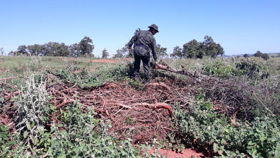 Imagens de satélite indicaram a derrubada de árvores em fazenda em Caiuá — Foto: Polícia Militar Ambiental