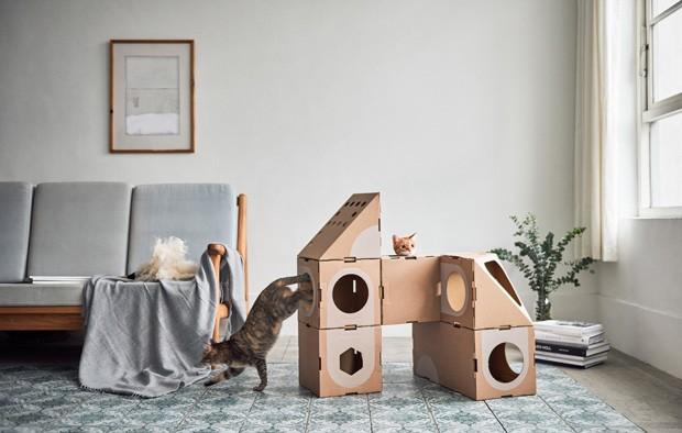Casal teve a ideia após adotar um casal de gatinhos (Foto: Divulgação)