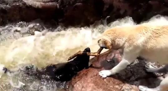 Salvamento canino