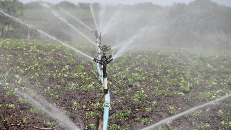 irrigacao-horta-agua (Foto: Pixabay)