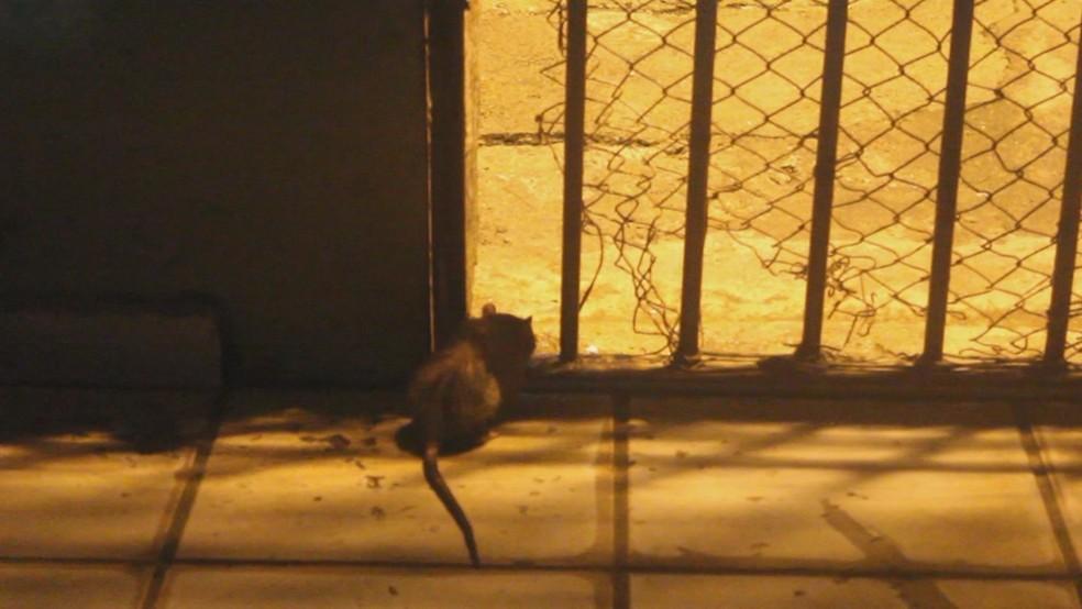 Roedores circulam por celas de presídio (Foto: Reprodução)
