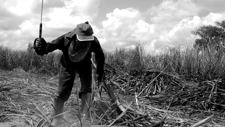 trabalho-campo-cana (Foto: Flickr)