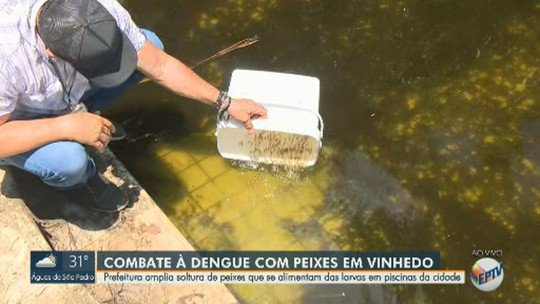 Vinhedo amplia soltura de peixes em piscinas abandonadas para combater larvas do Aedes aegypti