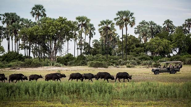 Atividades promovidas pela rede, que conserva mais de 2,5 milhões de hectares na África austral (Foto: Kiko Ferrite, Leonardo Finotti, Ruy Teixeira e Divulgação)