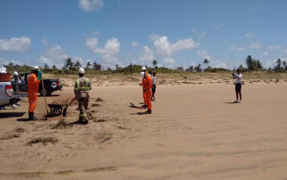 Equipes trabalham na limpeza das praias em Sergipe — Foto: Adema/Arquivo
