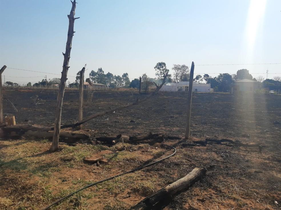 Fogo atingiu área de vegetação exótica em Tupã — Foto: Polícia Ambiental / Divulgação