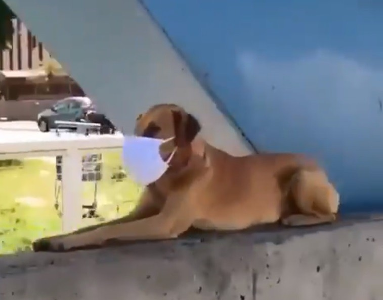 Vídeo de cachorro usando máscara em ponte de Juiz de Fora viraliza nas redes sociais