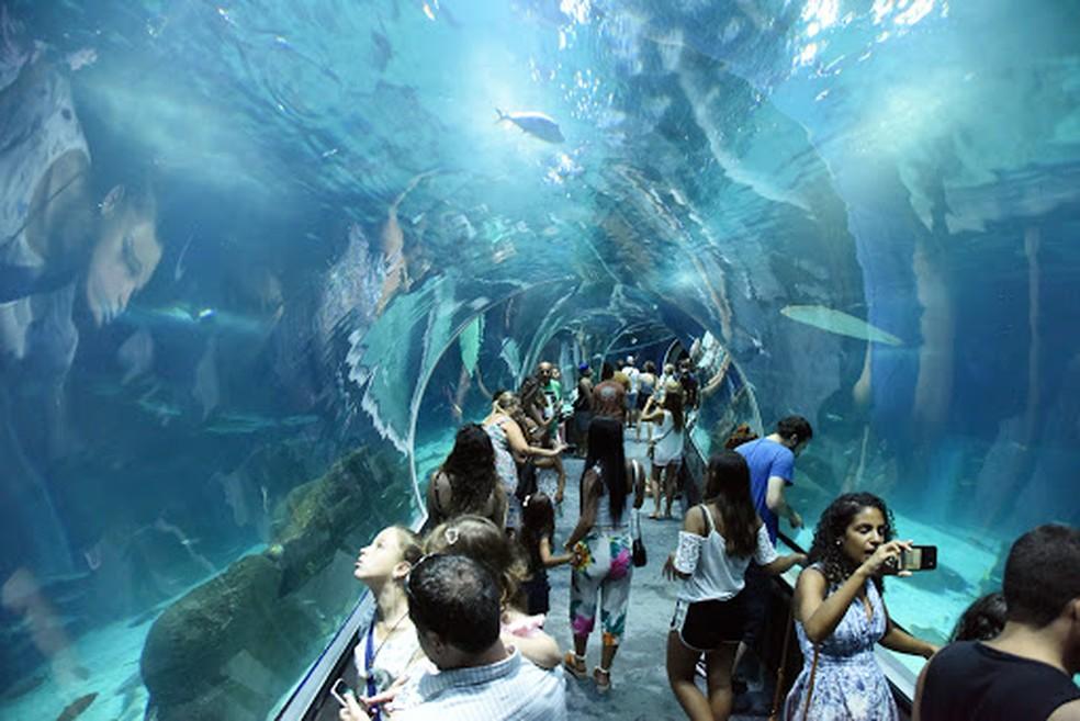 Tunel — Foto: O túnel é uma das estrelas do aquário - Foto: divulgação