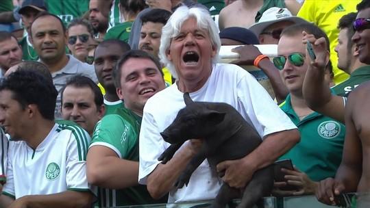 Torcedor leva porco ao estádio no jogo do Palmeiras em Goiânia; vídeo