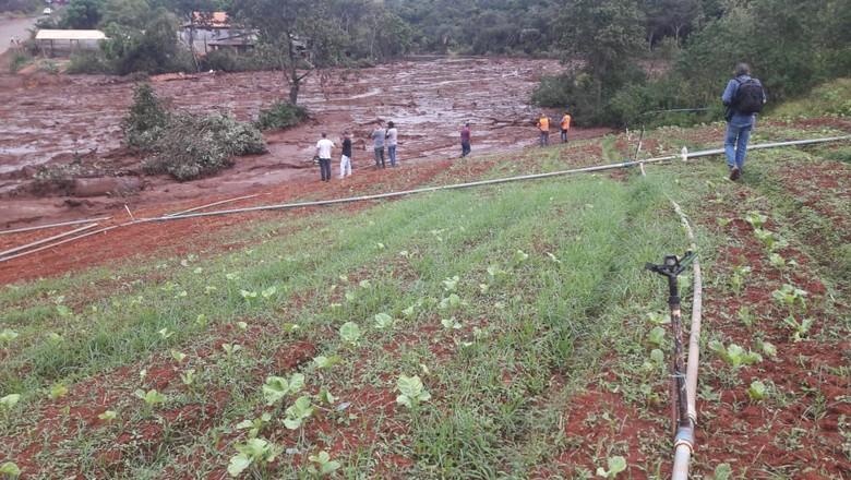 horta-plantação-brumadinho (Foto: Raphael Salomão/Ed,Globo)