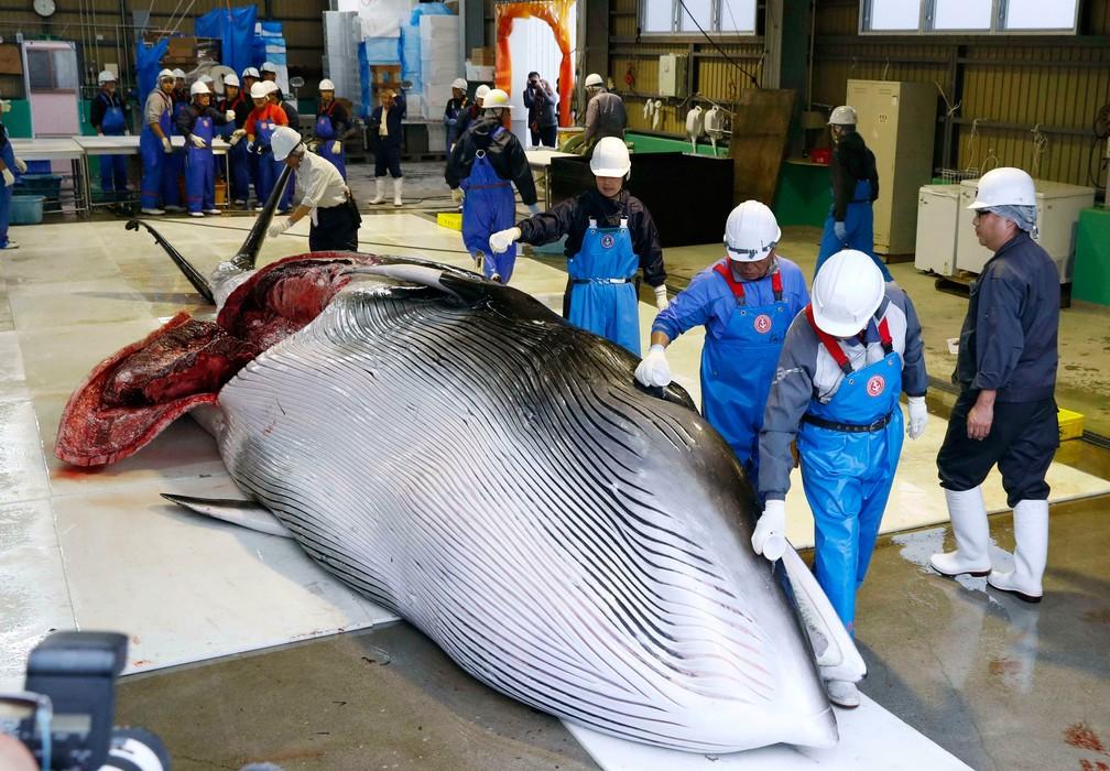 Baleia é trazida para a costa para ser processada em Kushiro, na principal ilha ao norte de Hokkaido, na segunda-feira (1º)  — Foto: Masanori Takei / Kyodo News via AP