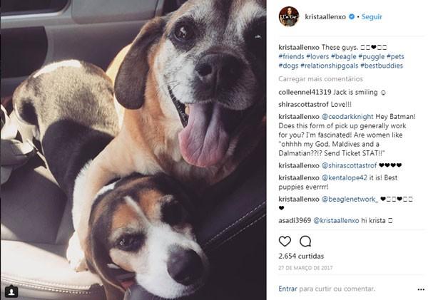 Os cães de Krista Allen (Foto: Reprodução/Instagram)