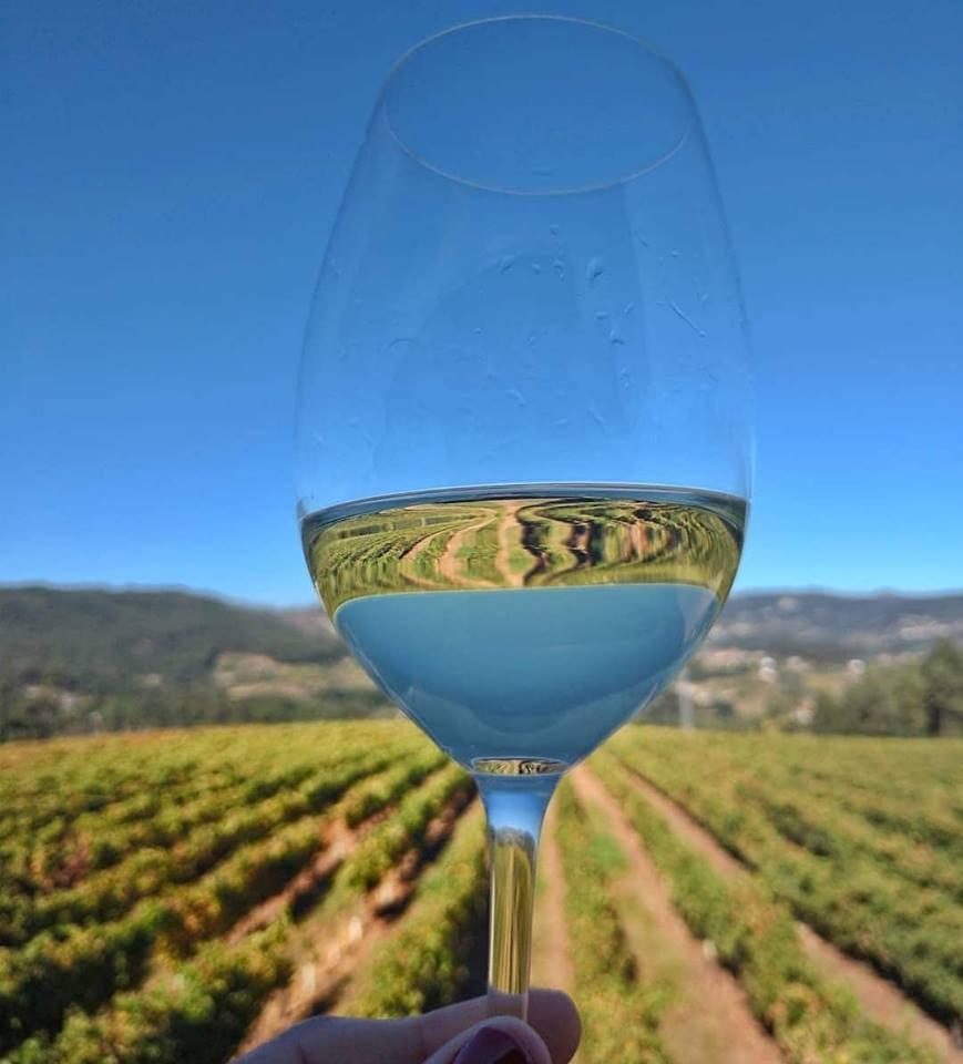 Vinho verde (Foto: Elaine de Oliveira)