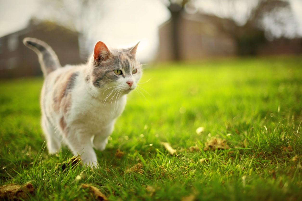 Veterinário explica os riscos e como evitar pneumonia em gatos