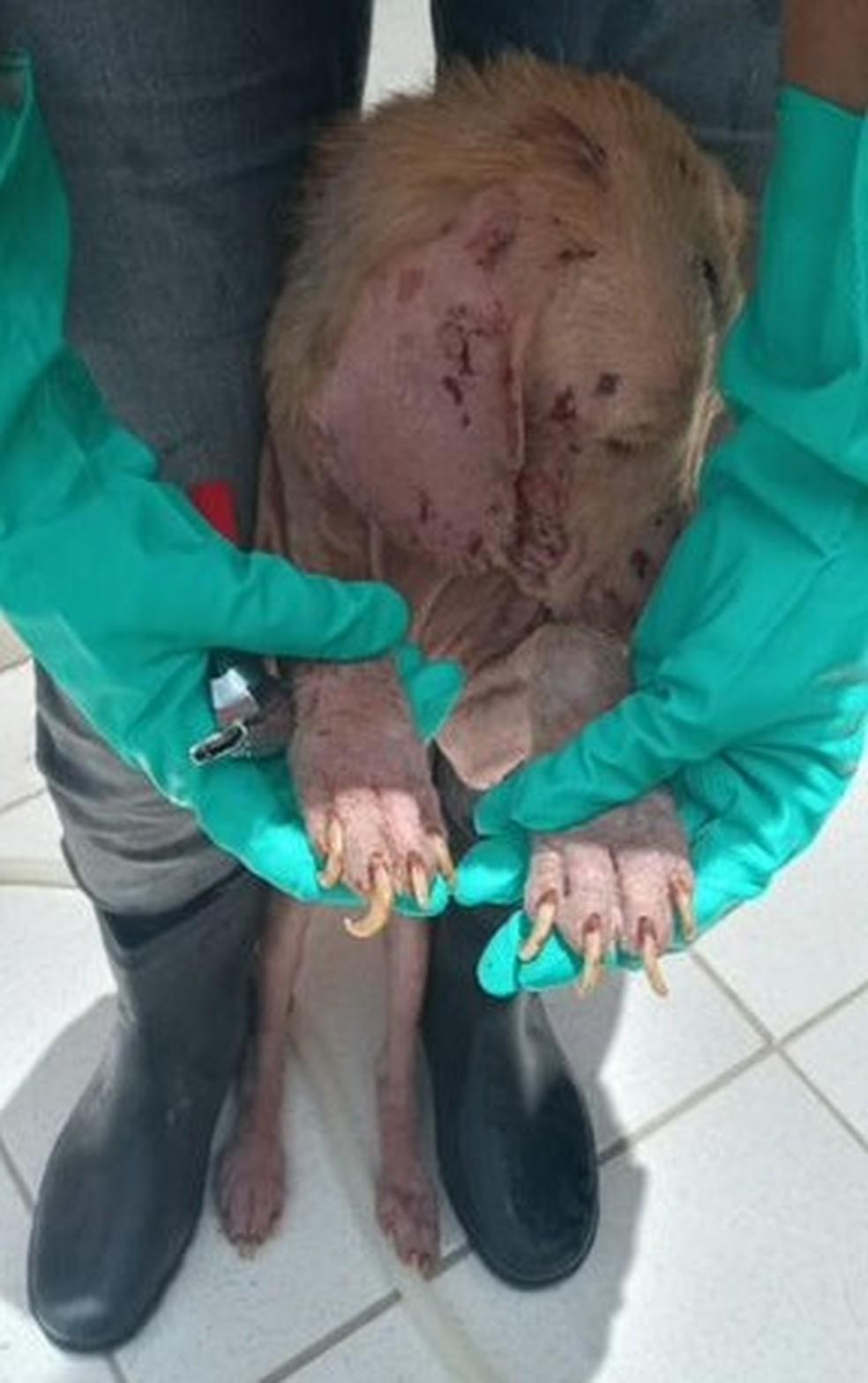 Animais são encontrados em situação de maus-tratos no canil municipal de Cabo Frio — Foto: Divulgação