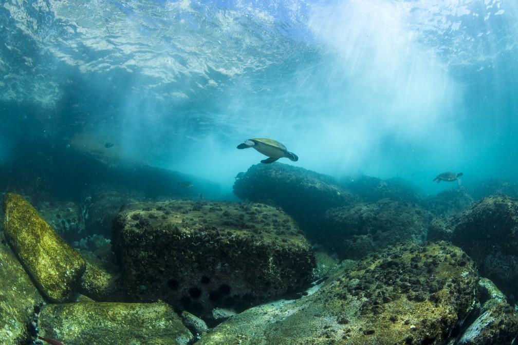 Rio do fundo do mar  — Foto: Áthila Bertoncini