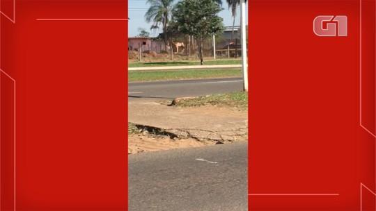 Vídeo mostra perseguição em rodovia de MS e policiais prendem traficante com quase 2 toneladas de maconha
