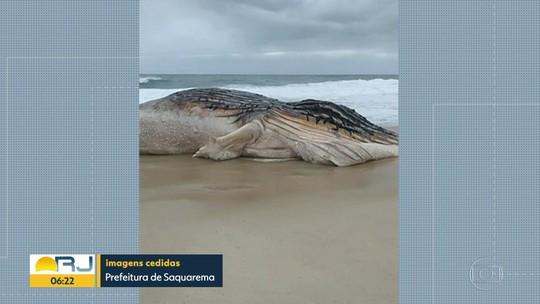Baleia aparece morta na Região dos Lagos
