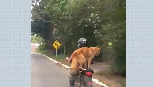 Cachorro se equilibra em garupa de moto em Paty do Alferes; veja vídeo