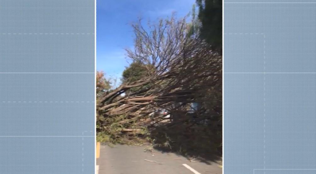 Árvore cai em cima de carro e bloqueia rua em Campinas