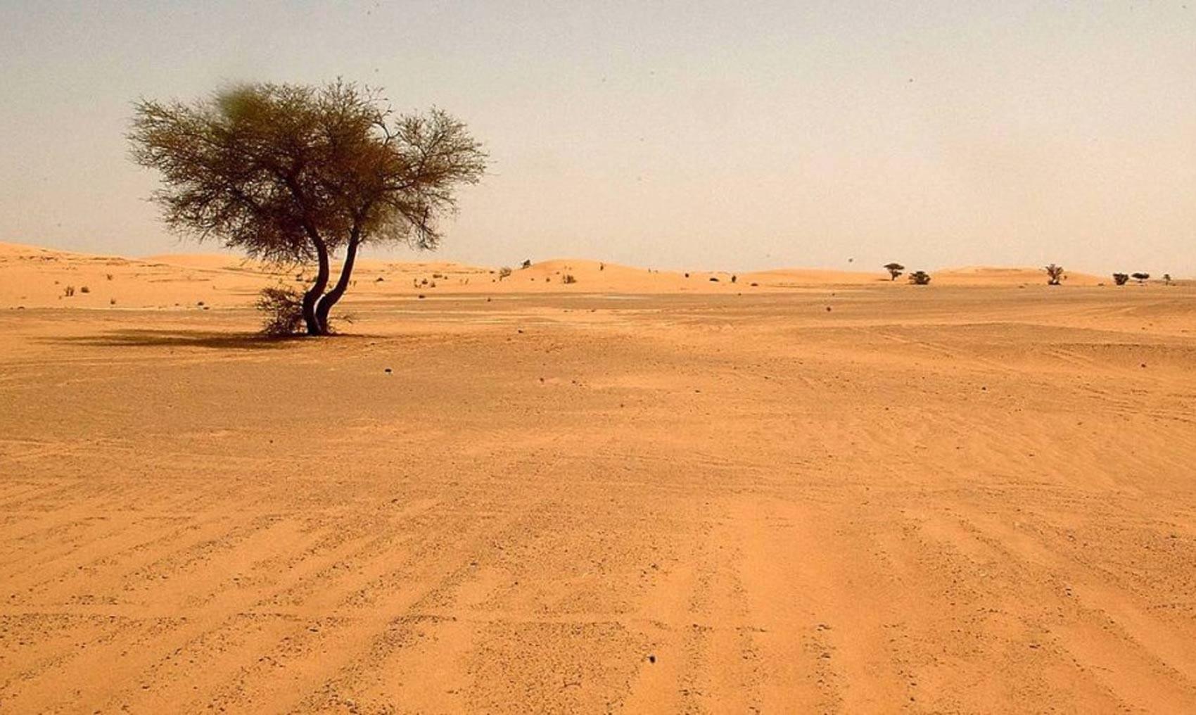 Como era o Saara antes de se tornar o maior deserto do planeta