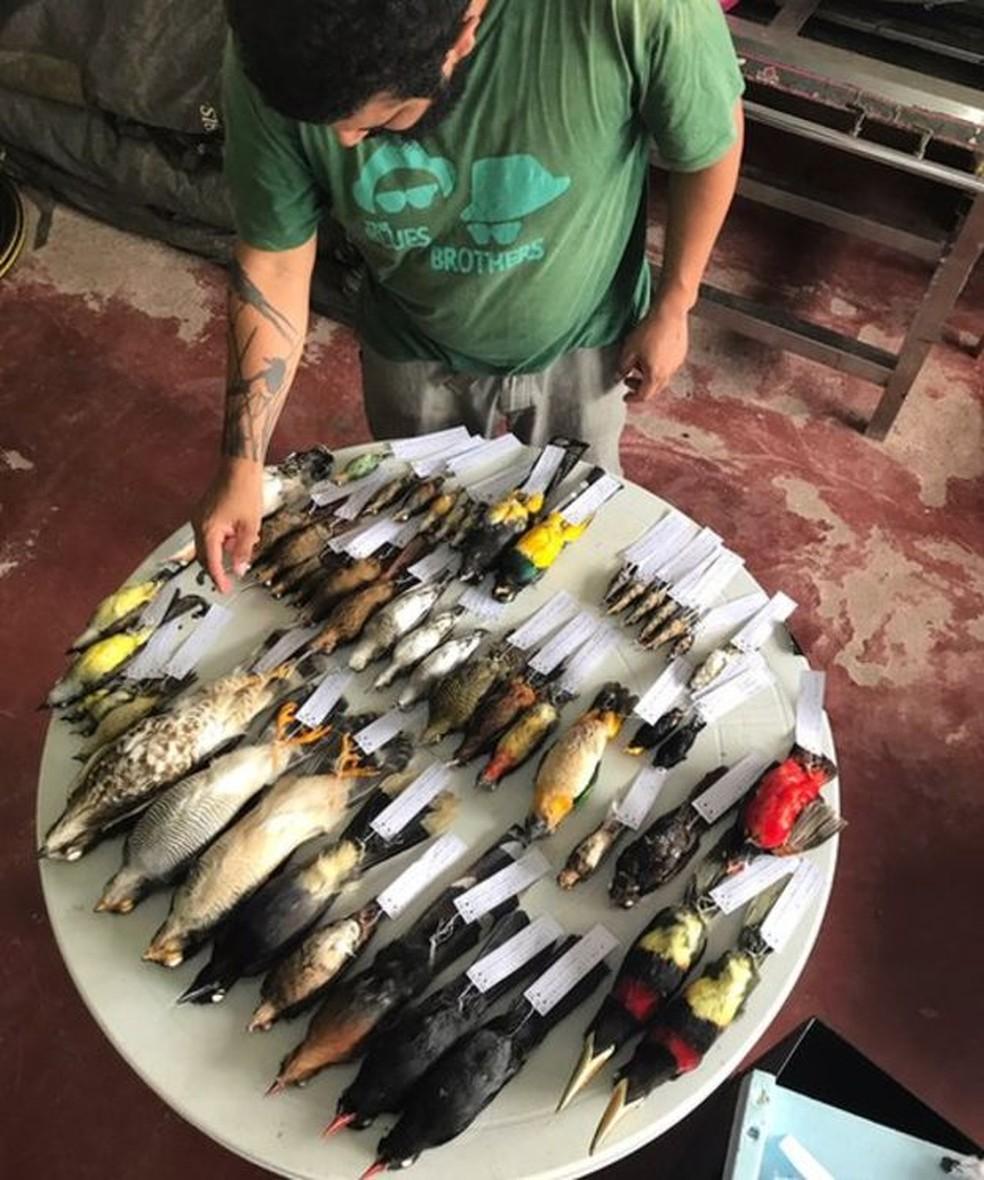 Aves sacrificadas e etiquetadas durante a expedição (Foto: BBC )